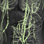 Detoxify - Lymph System
